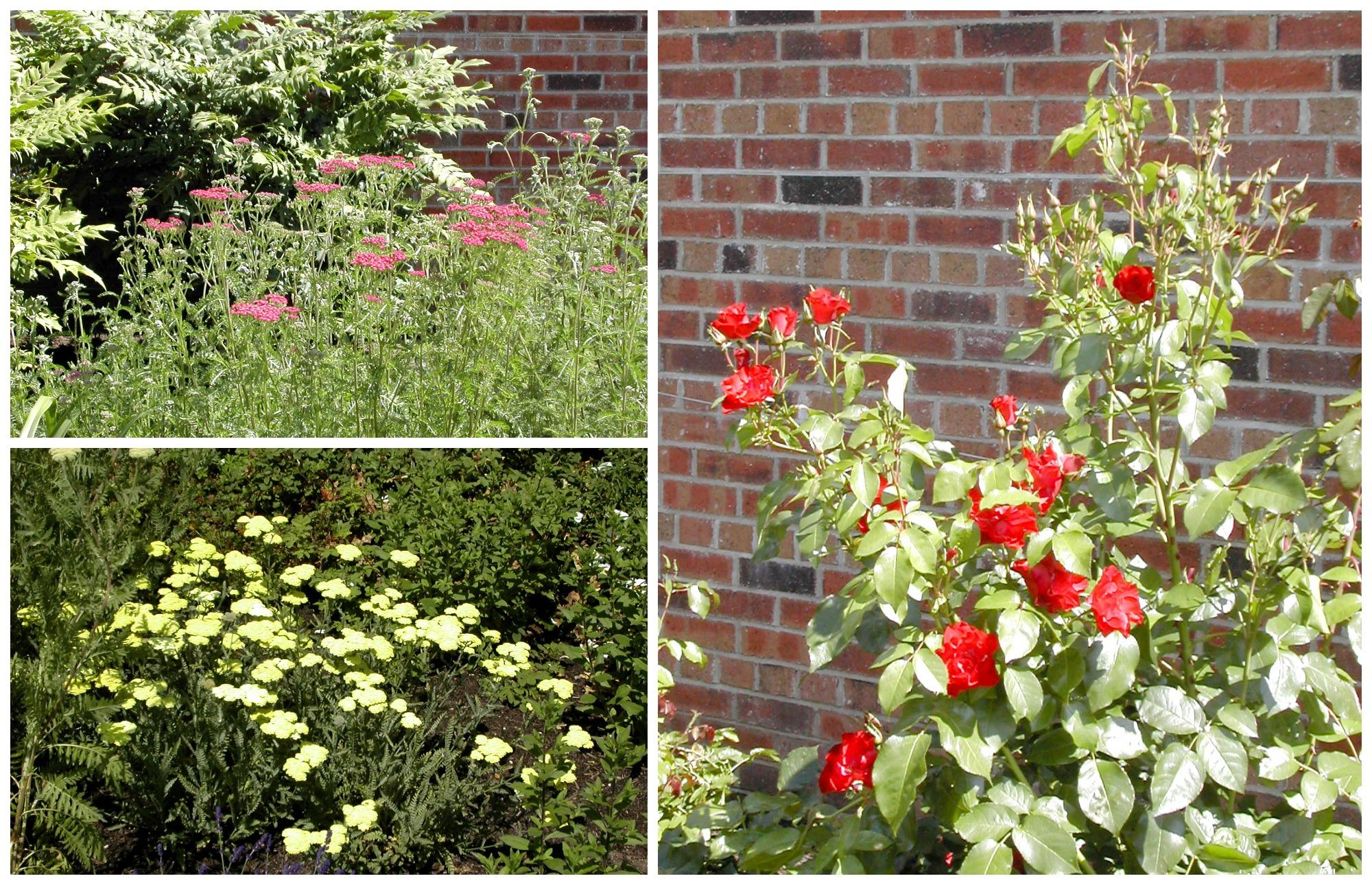 antrim gardens 1 Collage