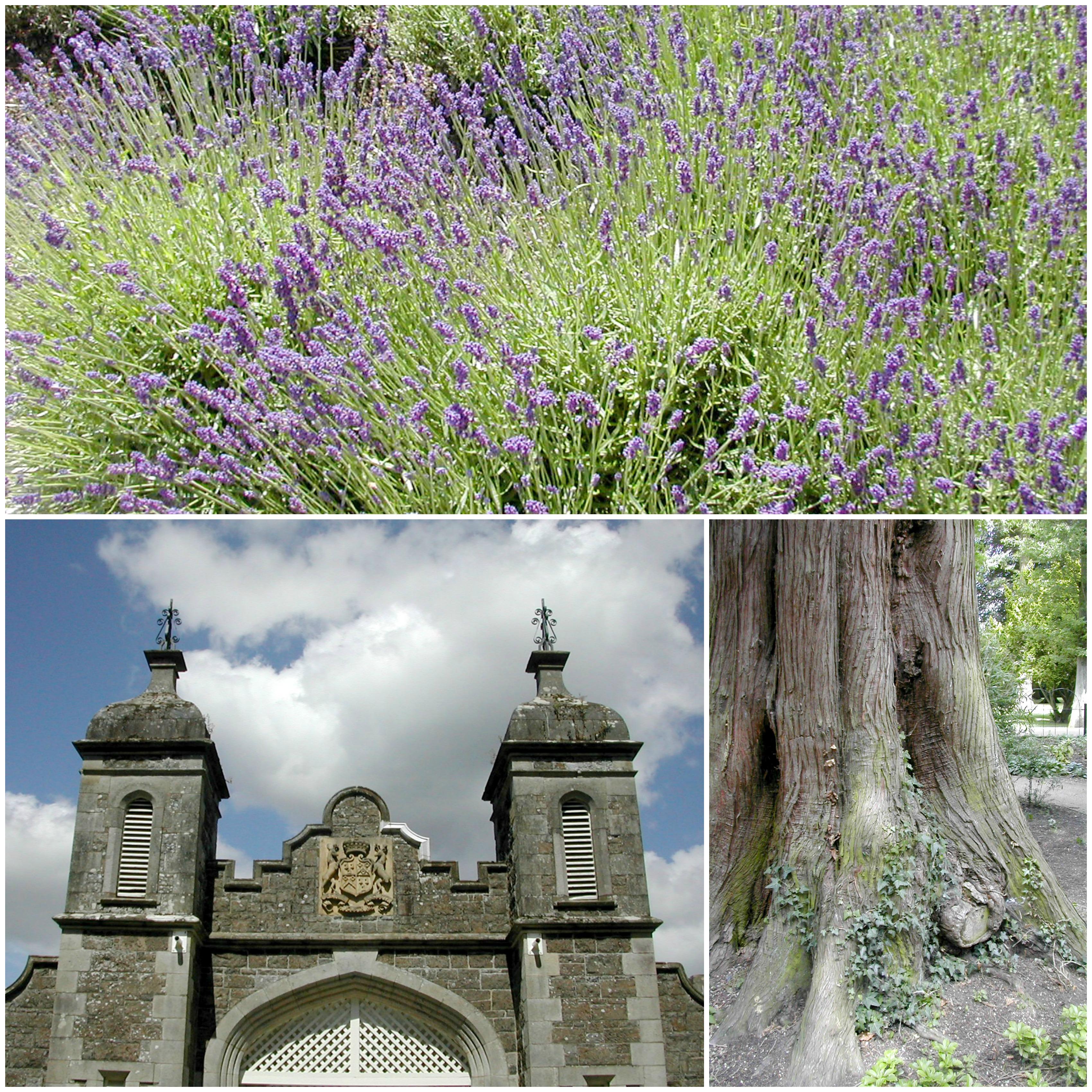 antrim gardens 3 Collage