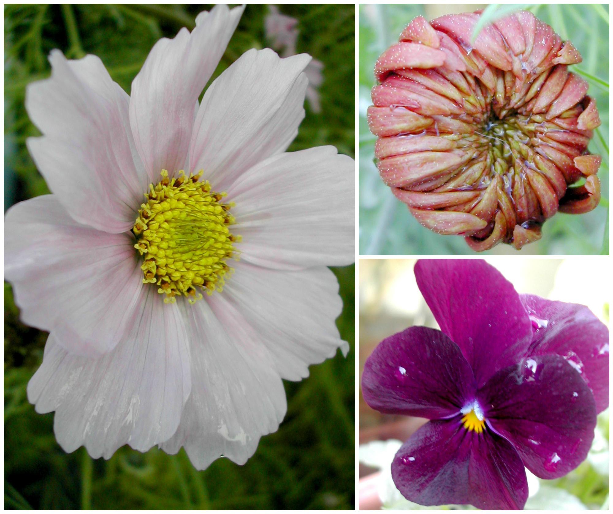 Nov Garden Collage