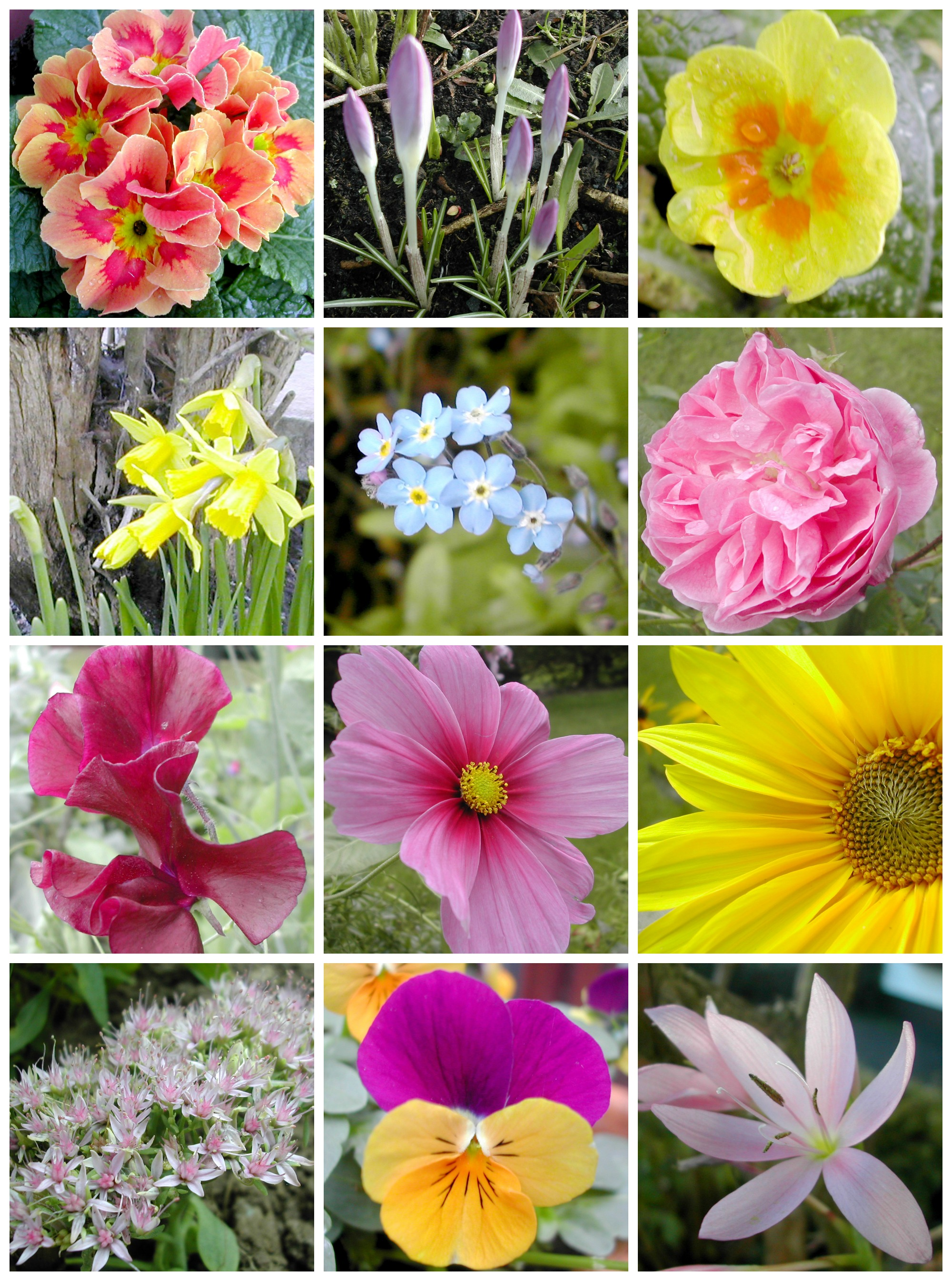 2014 flowers Collage